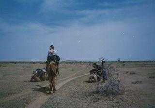 camel-2.jpg